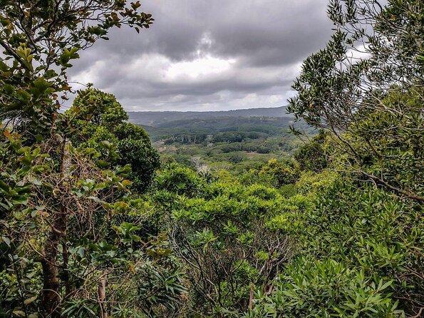 Ebony Forest Reserve