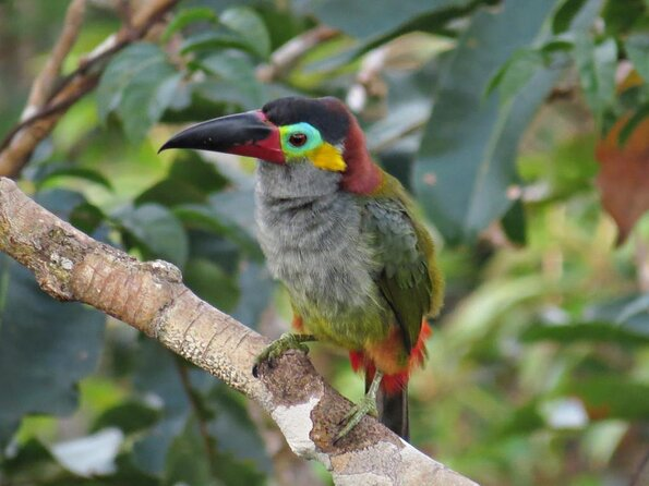 Manaus Botanical Gardens (MUSA - Museu da Amazonia)