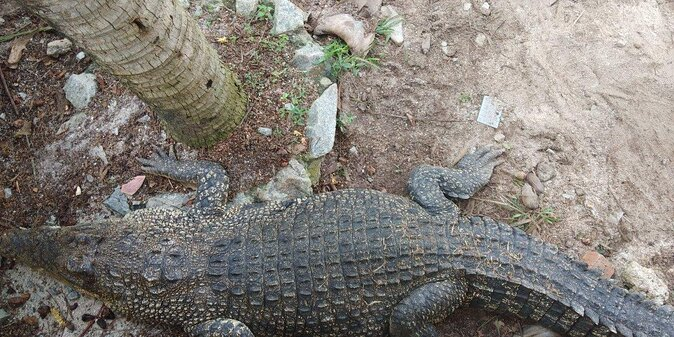 Malacca Crocodile Park (Taman Buaya & Rekreasi Melaka)