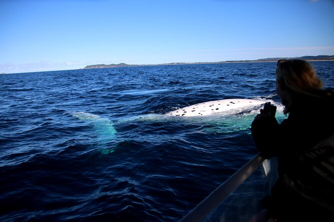 Byron Bay Whale Watching Cruise