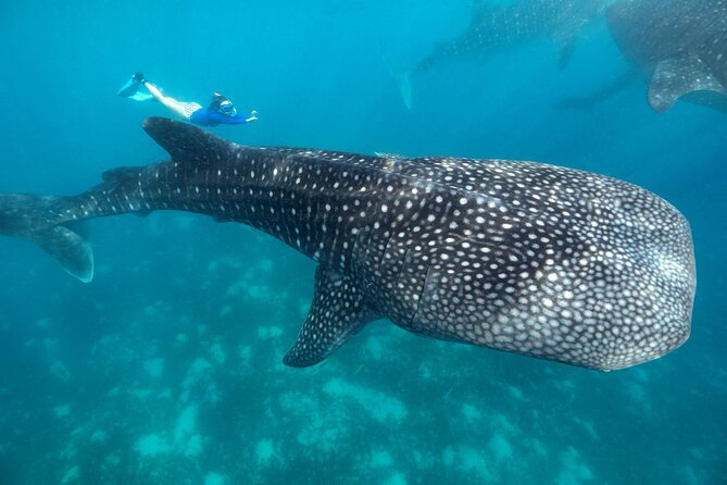 Whale Shark Encounter and Tumalog Waterfalls Tour