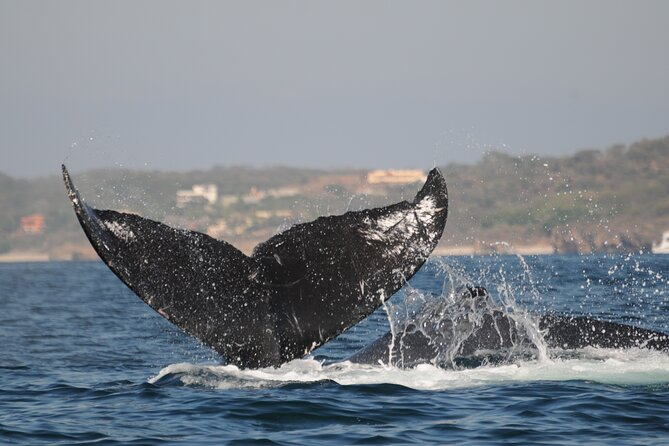 Whale Research Adventure Morning Tour