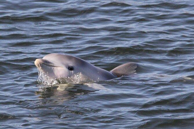 Adelaide Dolphin Sanctuary and Ships Graveyard Kayak Tour