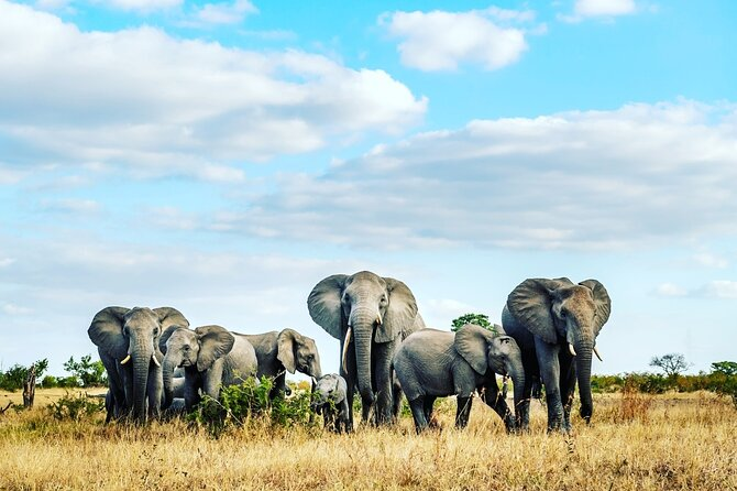 2-Day Luxury Wildlife Safari Camp in Akagera Park & Boat tour on Lake Ihema