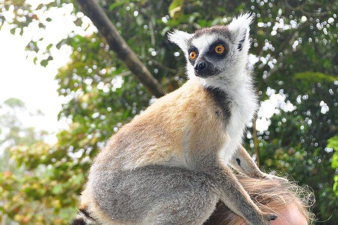 Visit to Andasibe National Park