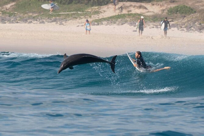 Cruise with Dolphins in Byron Bay