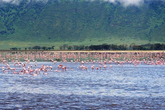 6 Days Tanzania Northern Circuit Experience