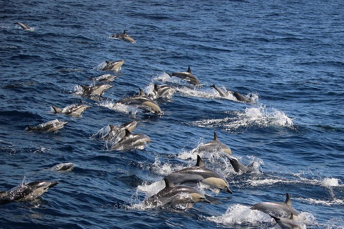 Swim with Dolphins in the Bay of Plenty with a Full-Day Tour
