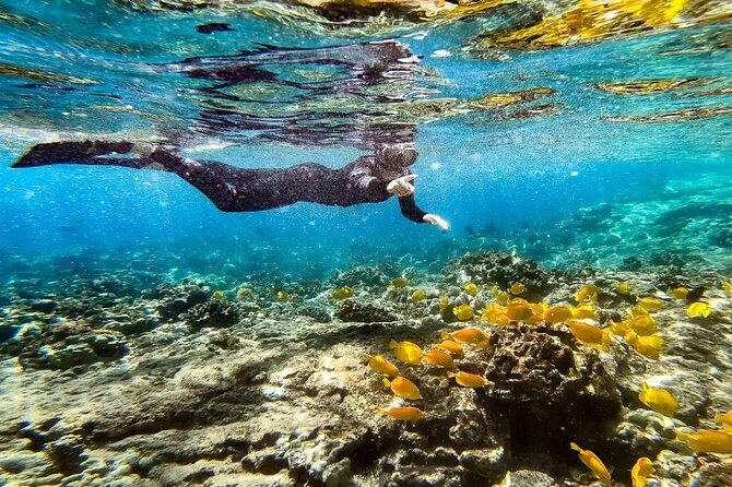 Kona Snorkel to Captain Cook Monument and Place of Refuge