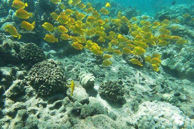 Snorkel Kona-Top 2 Snorkel Spots-Captain Cook Monument & Place of Refuge