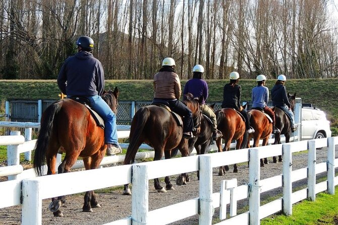 Christchurch Horse Trekking