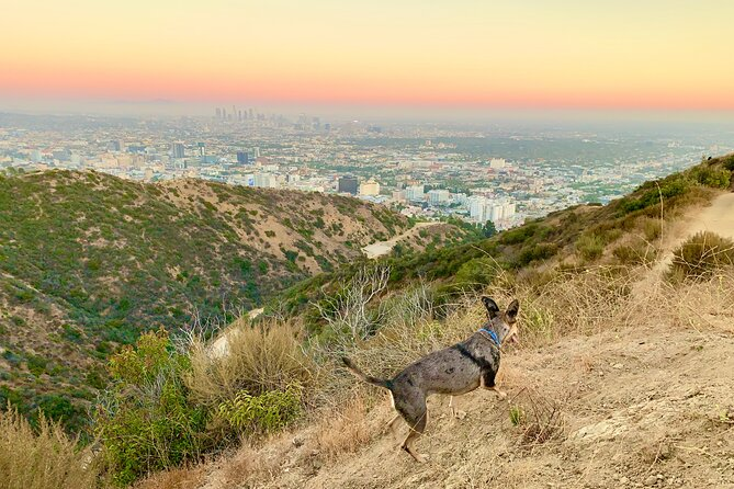 4-Hour Hollywood Walking and Hiking Sunset Tour