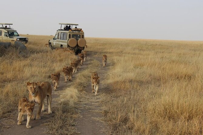13-Day Private Wildlife Safari Tour of Kenya and Tanzania