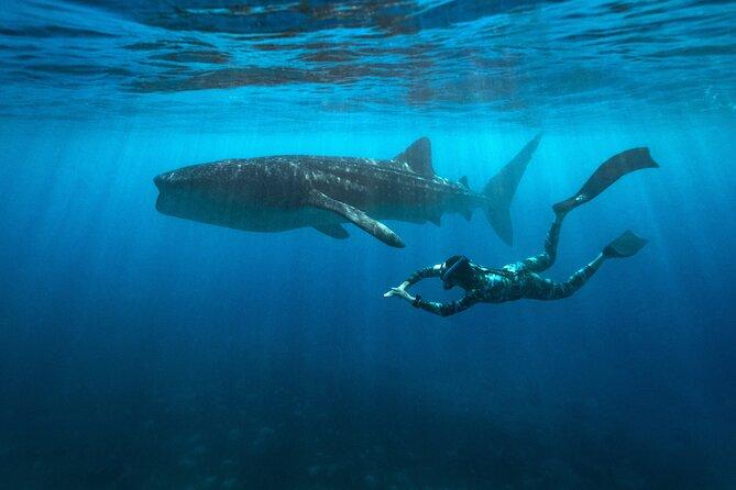 Oslob Whaleshark and Kawasan Falls Tour