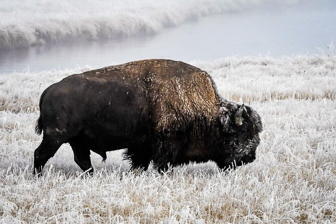9 Day Winter Yellowstone, Grand Teton & Mighty 5 National Park Private Explorer