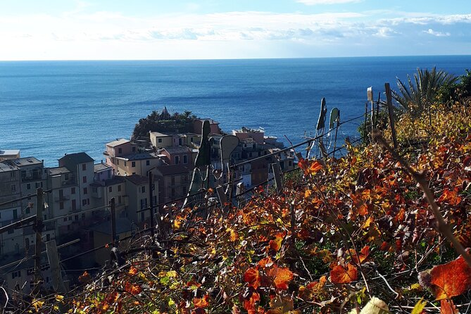 Cinque Terre walking tour with local wine tsting