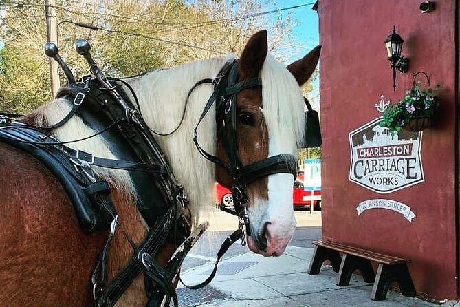 Charleston's Historic Residential Horse and Carriage Tour