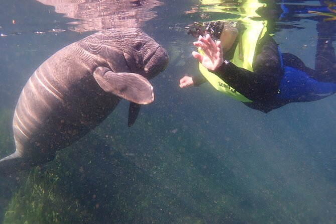 Manatees and Rainbow River by SCUBA or Snorkel
