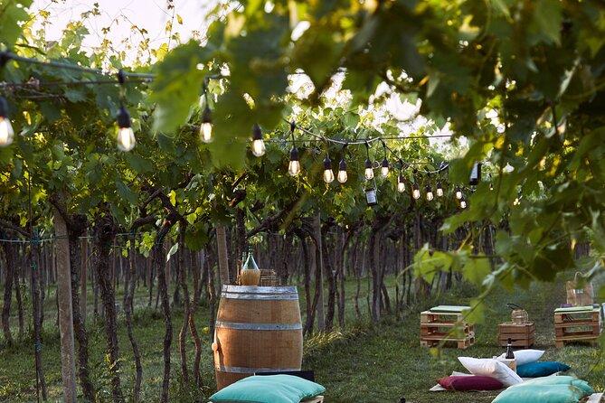 Opera Arias in the Vineyard at Sunset