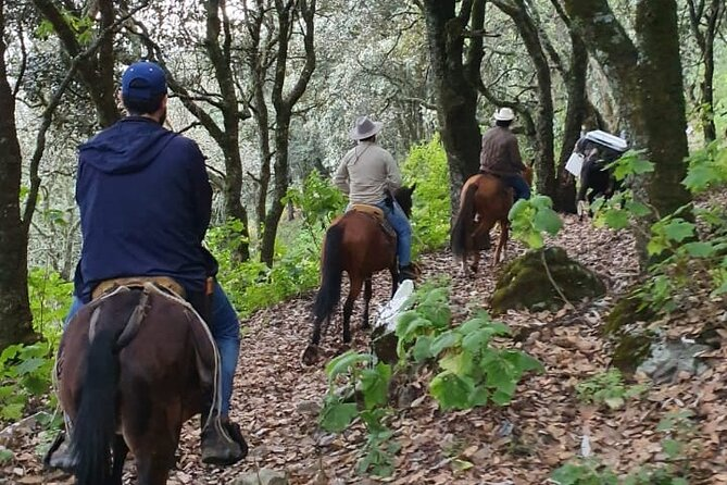 Horseback riding and camping in the mountains
