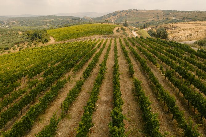 Private Half-Day Wine Tasting Tour in Lyrarakis Winery from Crete