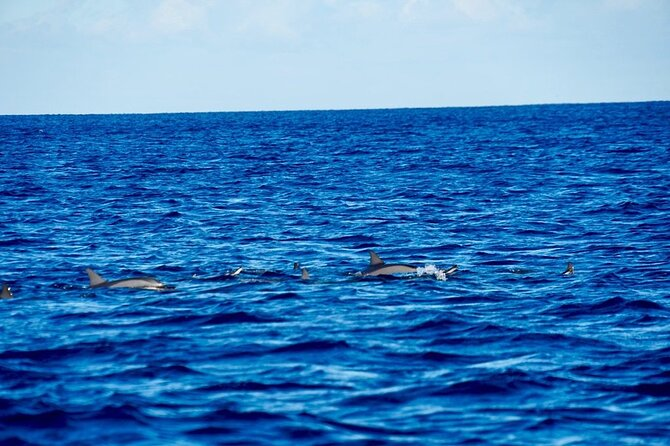 Dolphins Encounter and Whale Watching