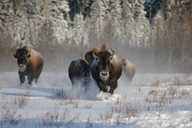 5 Day Yellowstone and Grand Teton Winter Tour - Private Small Group Tour