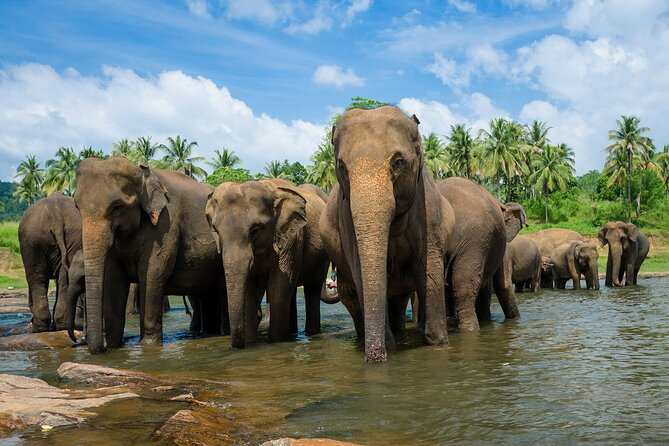 Day Excursions to Wilpattu National Park from Negombo
