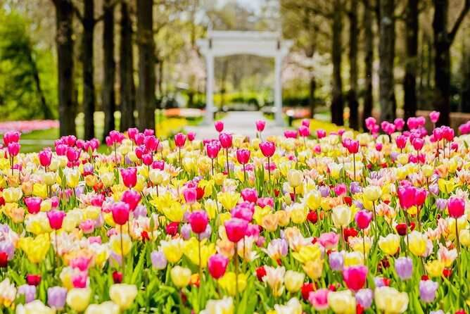 Flower Auction and Keukenhof Flower Park Small-Group Tour from Amsterdam