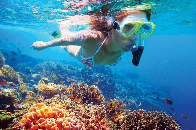 Reef Snorkeling Experience in Playa del Carmen