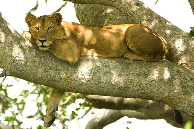 4 Days Mid-range Wild Safari