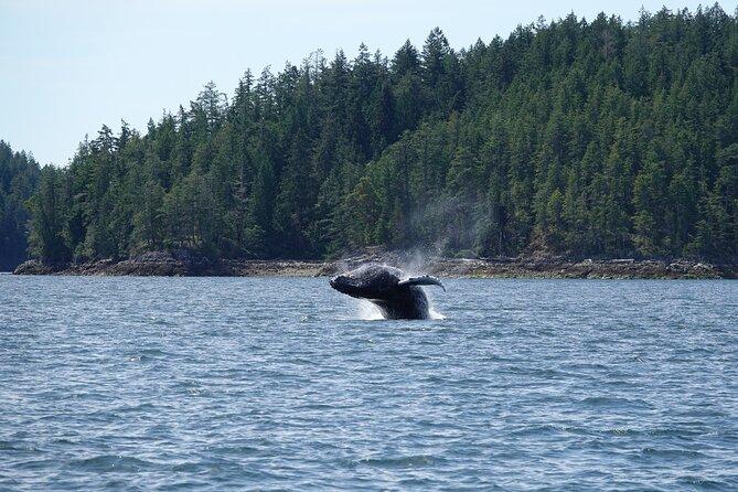 3 hour Zodiac Evening Whale and Wildlife Tour