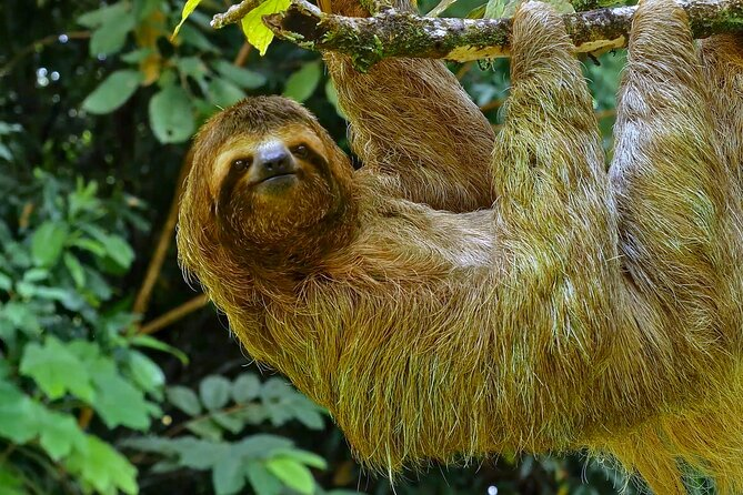 5 Days Wildlife Tour in Drake Bay, Sierpe, Corcovado and Osa