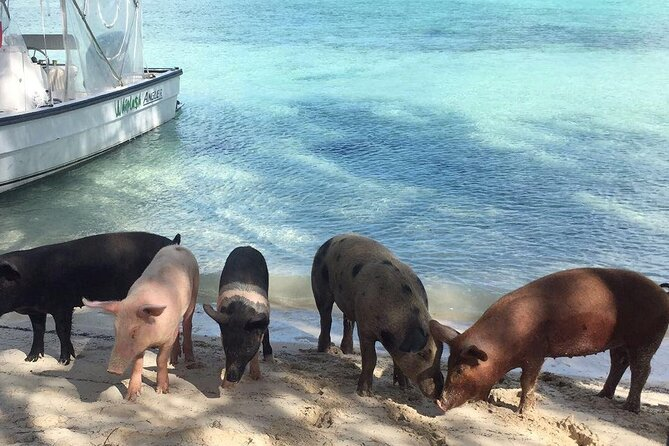 Eleutheraand Rose Island Private Boat Tour with Swimming Pigs