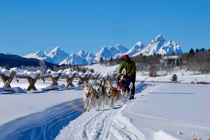 Jackson Hole Dog Sledding Adventure