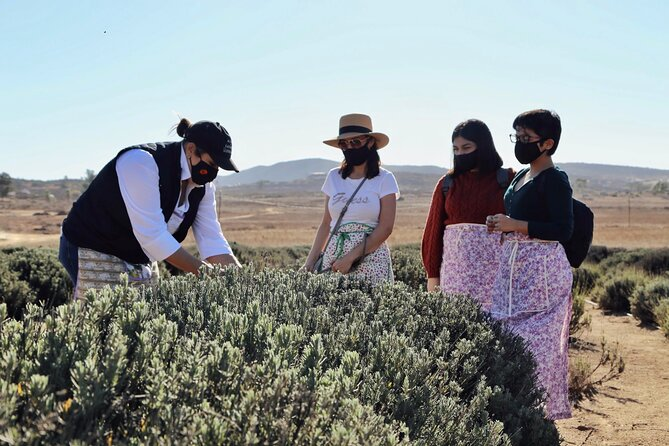 Lavender Field Guided Tour