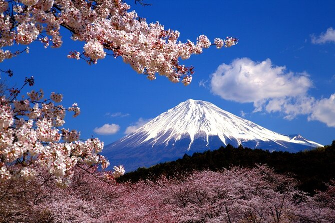 Virtual Tour to Discover Mount Fuji