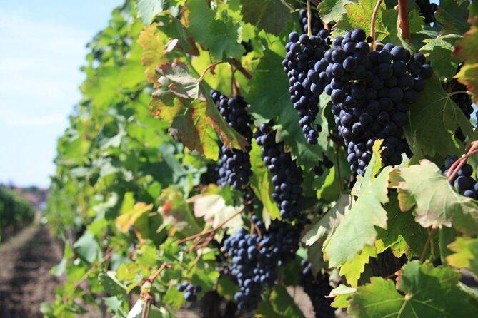 2-Day Argolis Private Classical Tour & Wine Tasting in Ancient Nemea
