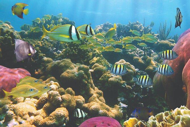 Kona Wildlife-Guaranteed - Departing Waikoloa - A-Bay