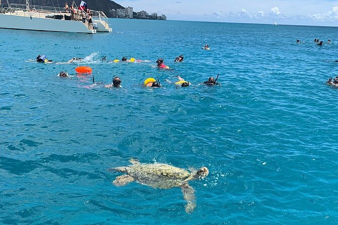 Turtle Snorkeling Adventure (Boat Tour)