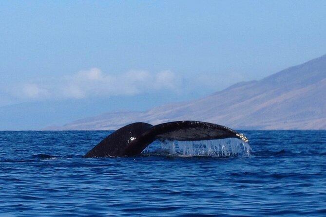 4 Hour Makena Whale Watch Tour