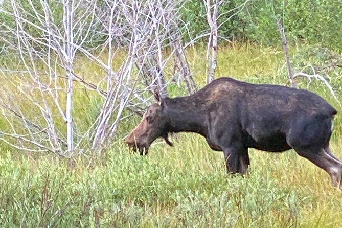 Grand Teton National Park Full-Day Private Tour