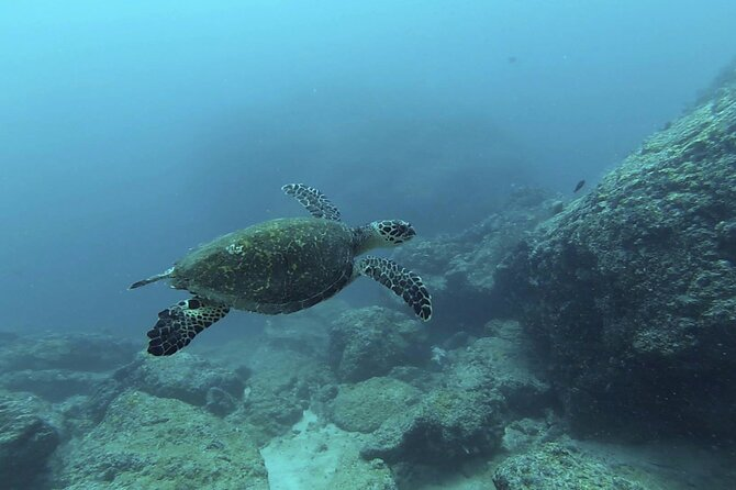 Marietas Islands National Park Excursion for Certified Divers