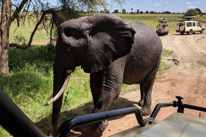 Multi-Day Tanzania Odssey Safari from Arusha