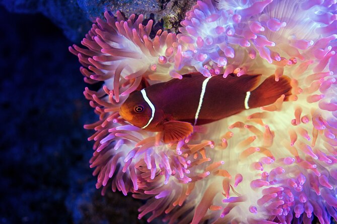 Cairns Aquarium Tour by Twilight with Drink and Appetiser