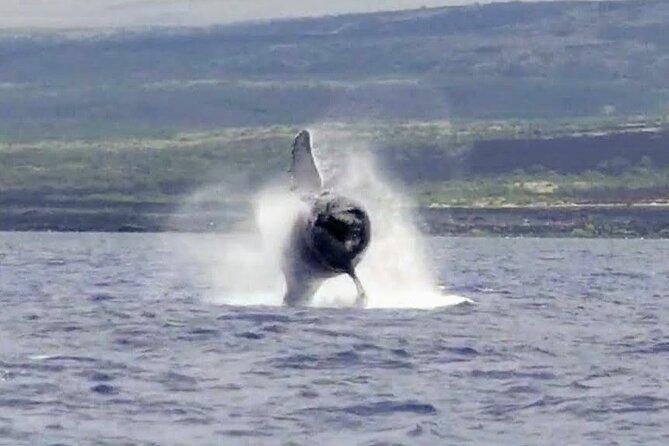 Guaranteed Whale Watch in Kona