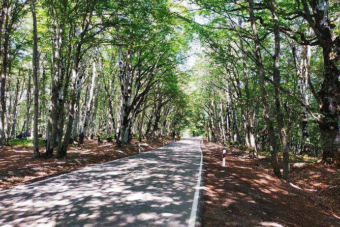 Private Tour to Gudauri from Tbilisi (Sabaduri Forest,Jinvali, Ananuri,Panorama)