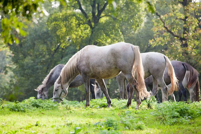 Private Half-Day Tour to Lipizzaner Horses from Trieste