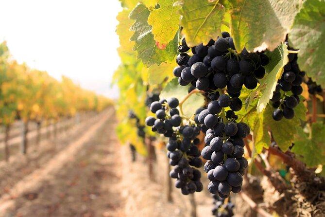 Niagara Wine Tour og smaksprøver med inkludert transport