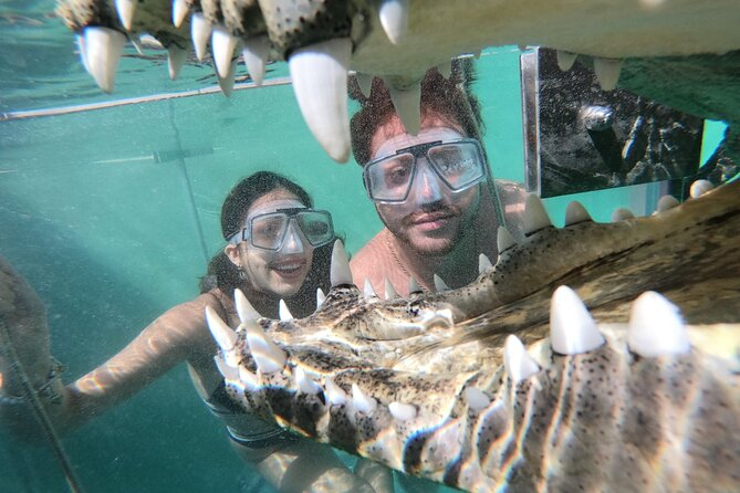 Dive with Crocodiles in Cabo. Cage diving & wildlife interaction